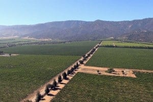 McIntyre_Vineyards_Aerial